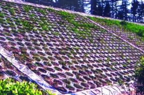 空心植草护坡砖模具针对护坡项目施工建议及规范