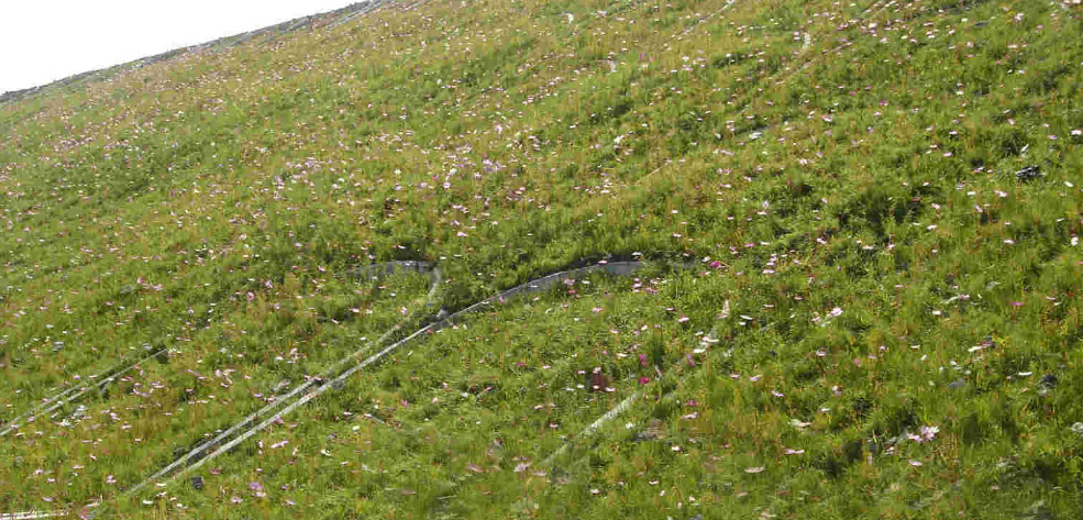 生态护坡植被