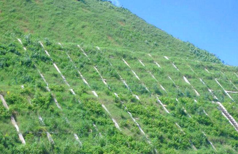 生态护坡技术