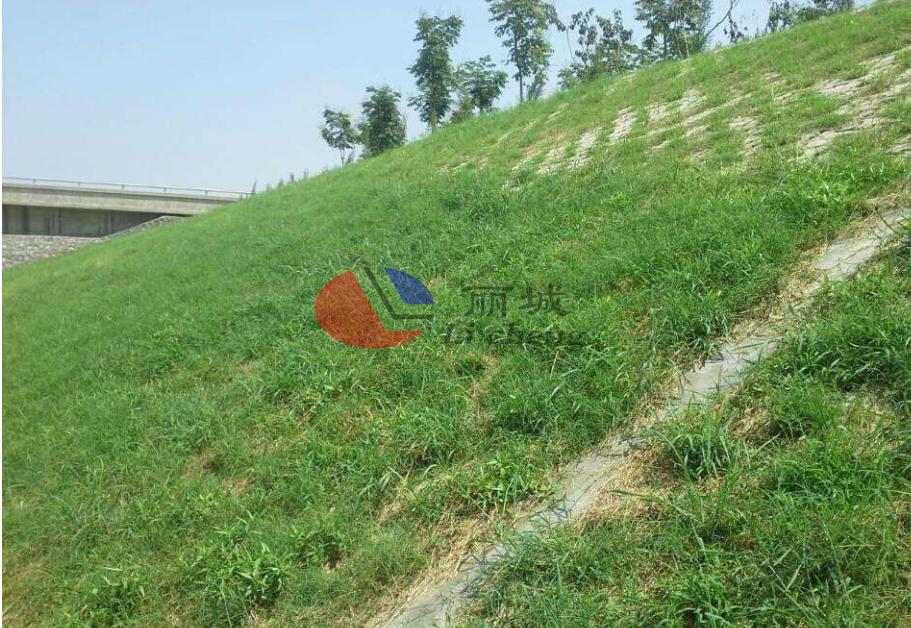 植物边坡防护